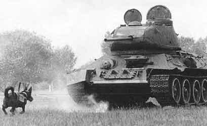Собаки на тренировке по уничтожению танков